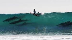 surf lessons with dolphins, club ed surf school and camps